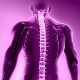 Neospine Nuvasive KLS MArtin Spine Art distributor
